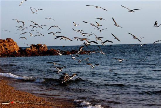新浪旅游配图:海鸥 摄影:图片来自旅游攻略