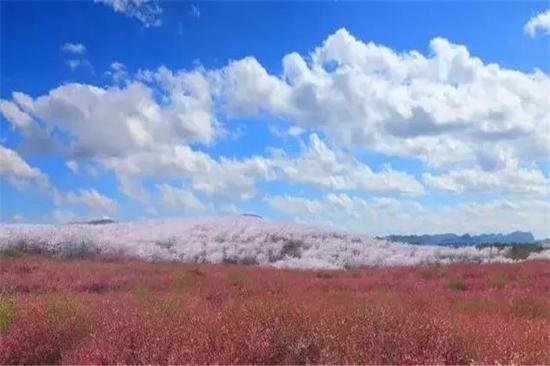 平坝万亩樱花园