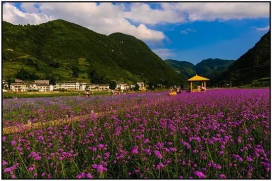湄潭薰衣草产业园
