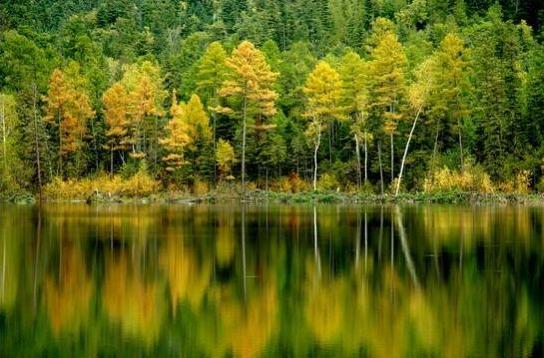 五营国家森林公园(图片来源于网络)