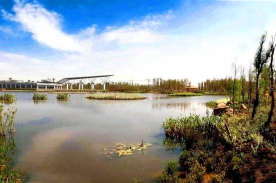 昆明滇池水真变清啦 这画面太美了!