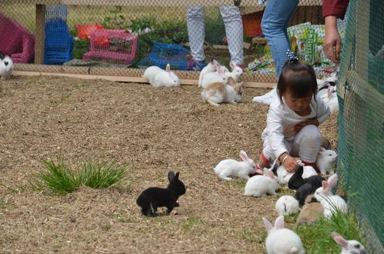 """中秋节 到云南野生动物园和""""玉兔""""来相会"""