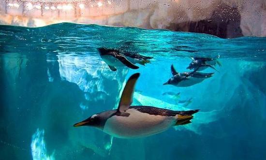 壁纸 海底 海底世界 海洋馆 水族馆 550_331