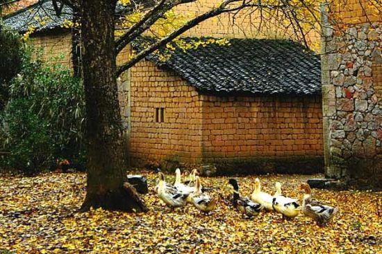 村中典型的风景 图:新浪博主/七月娃娃