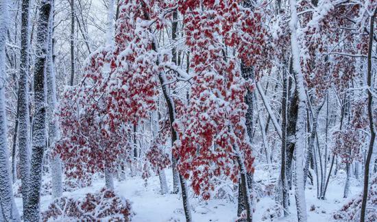 集安 甜糯的冬天