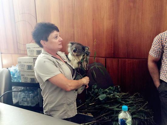 国宝袋鼠欢迎远道而来的客人 来源:南澳大利亚旅游局