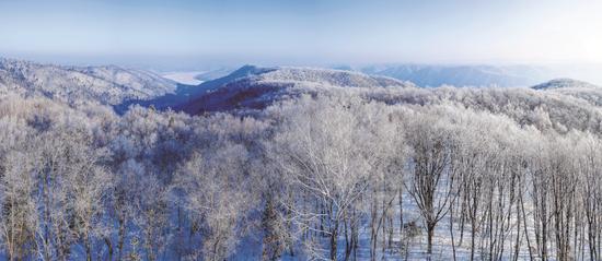 摄影作品:雾凇漫洒滚秃岭 太平沟林场图片