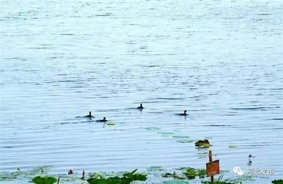 衡水:生态休闲名城
