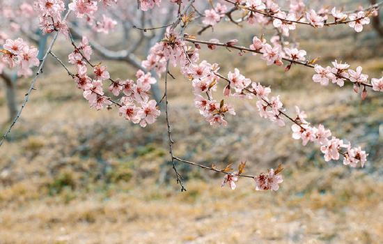 三十岗桃蹊农场  (摄影:木然光影)
