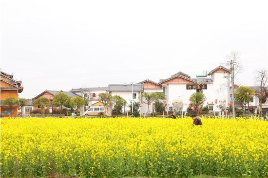 平寨村四周的油菜花