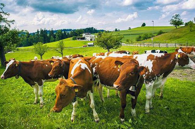 瑞士奶酪吃货之旅