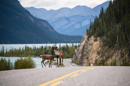 图注:97号公路 来源:BC省旅游局/Andrew Strain