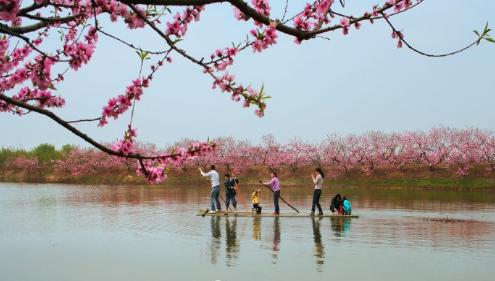 划桨观花(图源:@合肥晚报)
