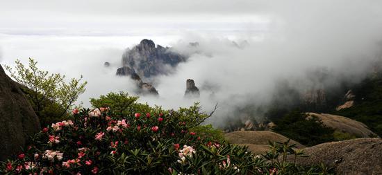 黄山云海和杜鹃