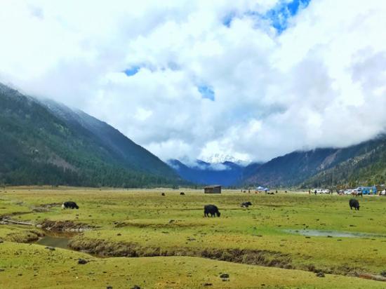远处山下的几只牦牛和木房子勾勒出一副世外桃源的画卷