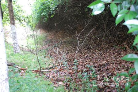 玉溪古窑遗址内,2号龙窑依然沉睡在地下。