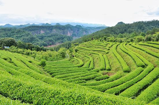 境元茶舍的茶山,可远眺大金湖