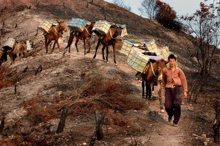 马帮(图片来自网络)