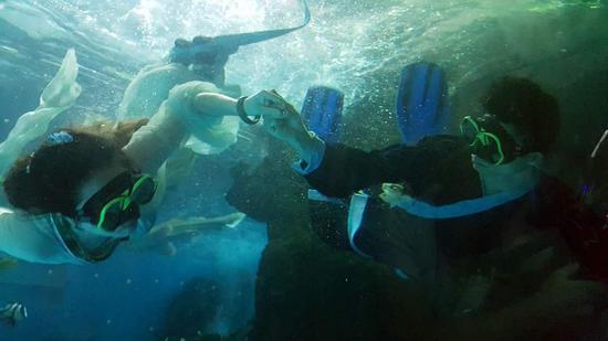 合肥海洋世界表演