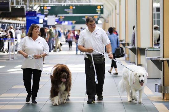 """机场工作人员会确保""""治疗犬""""在帮旅客解压的过程中自己不会压力太大"""
