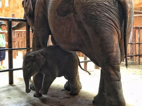 昆明动物园小象百日庆典 游客拍照赢门票