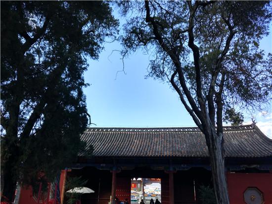 (文庙里的千年古树   摄影/王璐)
