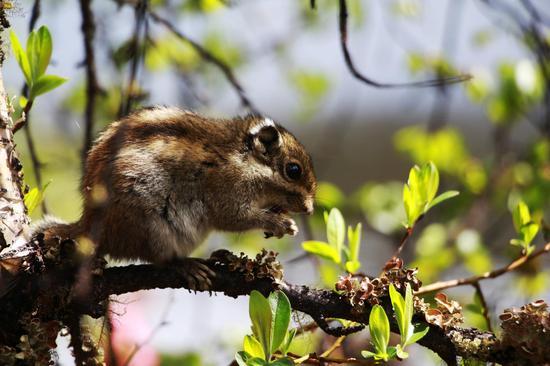 随处可见的松鼠