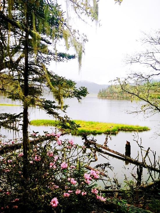 湖边盛开的杜鹃花(摄影:潘道海)