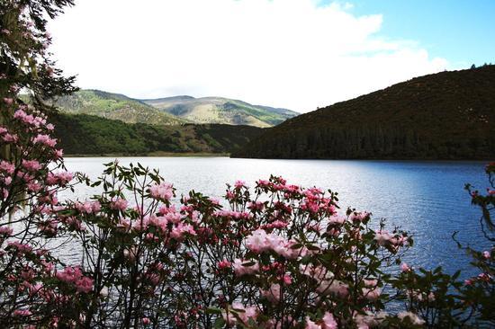 4月到6月,景区盛开的杜鹃花(摄影:张艳艳)