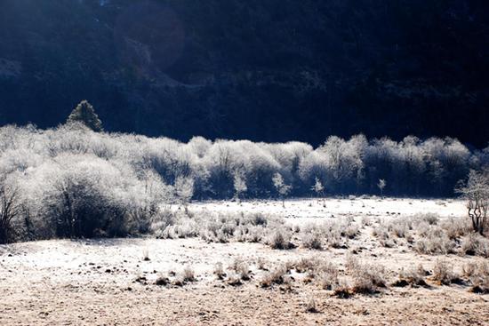 冬(图片来源:普达措国家公园供图)