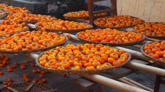 香甜的柿子 图:卢晓燕