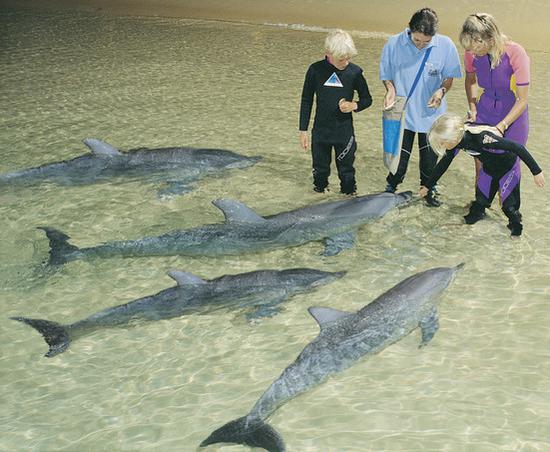 摩顿岛喂食海豚