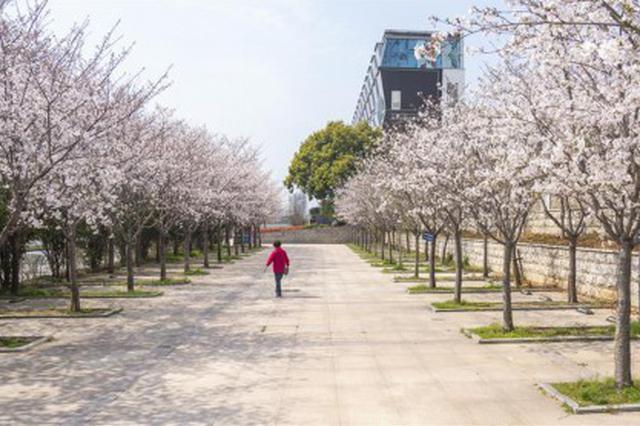 特写:春分过后的武汉