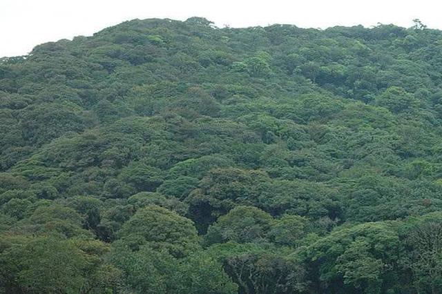 """""""十三五""""以来森林旅游游客量年均增百分之十五"""