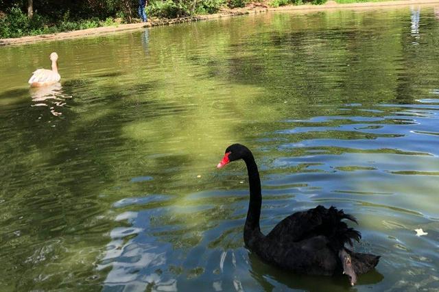 京津冀联合开展鸟类等野生动物保护行动