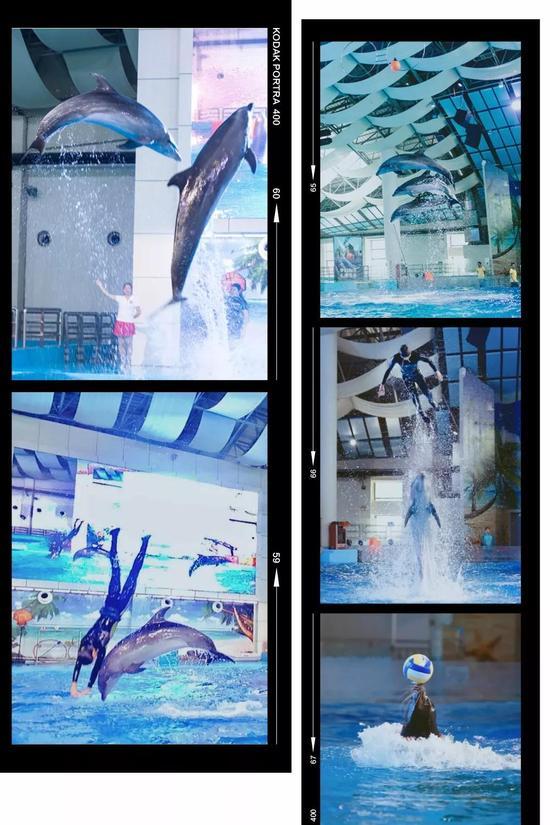 更有海豚海狮宝宝们的花式表演!