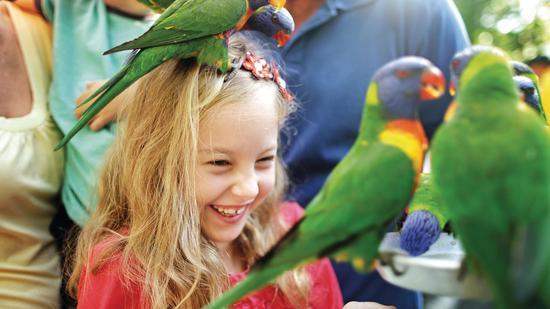 可伦宾野生动物保护区 图源:澳大利亚昆士兰旅游
