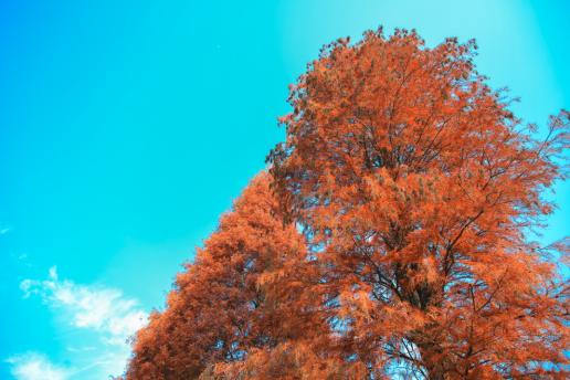 水杉美景让公路更添一份灵动与仙气