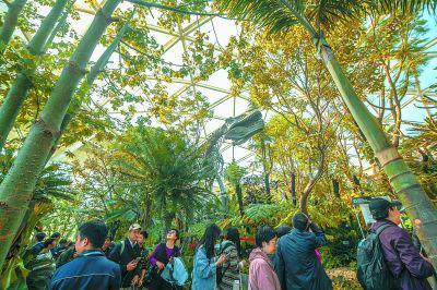 花卉国际竞赛贯穿北京世园会整个会期