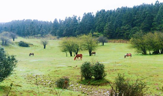 仙女山山顶草原