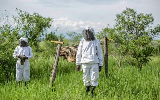 本扬加布养蜂合作社