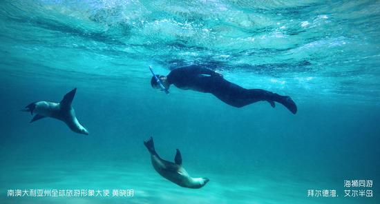 南<a href='http://travel.sina.com.cn/aodaliya-lvyou/?from=b-keyword' target='_blank'><em>澳大利亚</em></a>州全球旅游形象大使黄晓明-<a href='http://travel.sina.com.cn/aierbandao-lvyou/?from=b-keyword' target='_blank'><em>艾尔半岛</em></a>海狮同游
