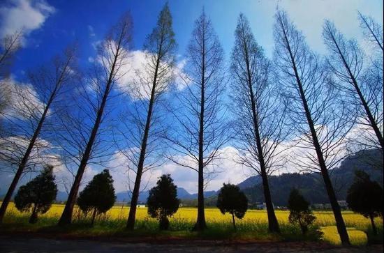 摄影:台北张隆