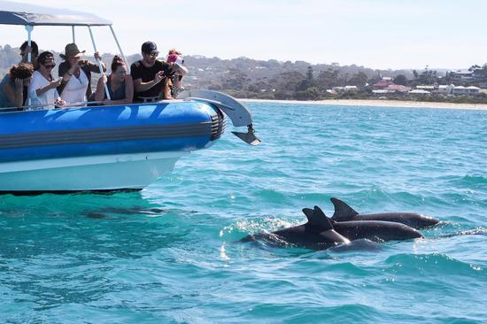 南<a href='http://travel.sina.com.cn/aodaliya-lvyou/?from=b-keyword' target='_blank'><em>澳大利亚</em></a>州-菲尔半岛大鸭号快艇