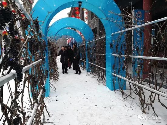 展区一侧,雪中的满架冰葡成为点睛之笔