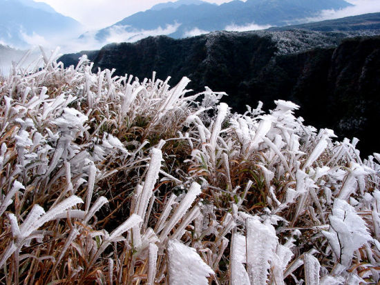 大明山雾凇景观 图:陈大华