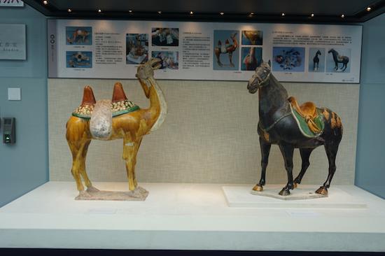 修复后的唐三彩骆驼与唐三彩马