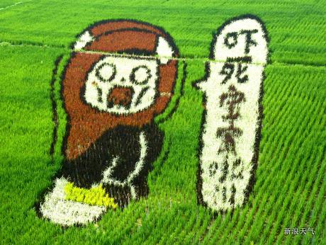什么鬼? 稻田画像竟如此逼真