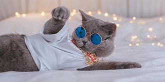 猫咪也开始玩嘻哈了