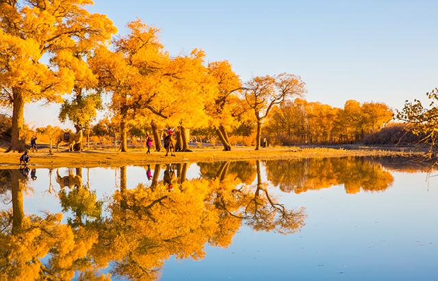 额济纳的秋天美得不像话